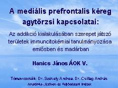 hj2006-1