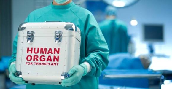 transzplant