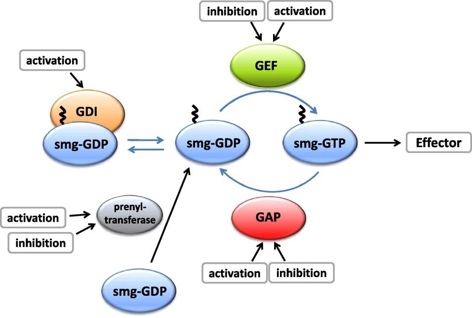 Ligeti lab kis G-fehérje